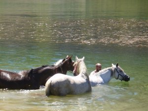 taking a bath with the horses in the lake