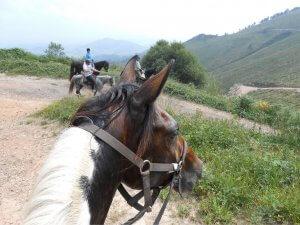 Tutatis es de nuestros caballos el más tranquilo, siempre dispuesto a correr nuevas aventuras