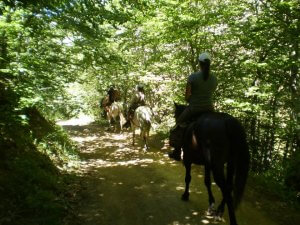 going through a forest with the horses