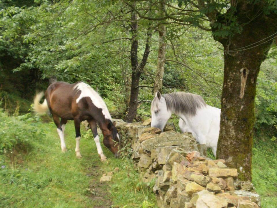 caballos pastando después del primer día de ruta, en la cabaña en la montaña que sirve de refugio en las rutas largas