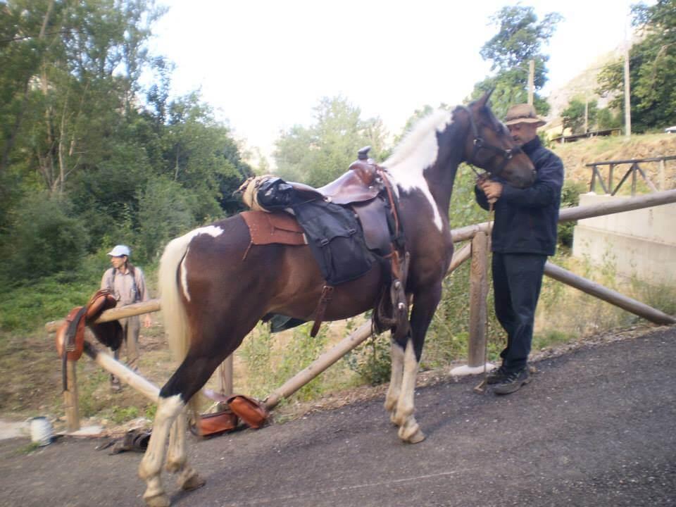 caballo tutatis